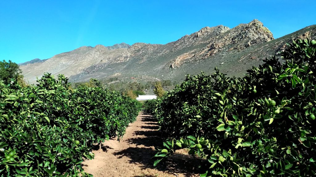 Mountain views from our orchard-W1920